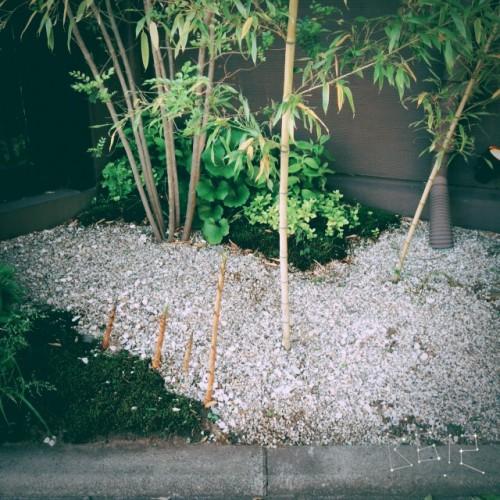 木谷ブログ写真②